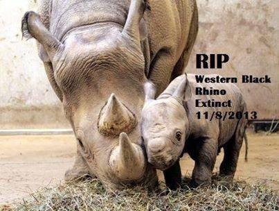Vuelo de la Esfinge - EXTINCION Rinoceronte